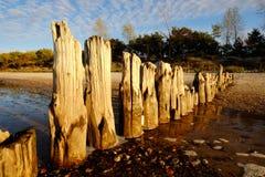 Seeküste, altes Holz, Wellenbrecher, steiniger Strand, Düne, Wald, Wolken, Himmel, Beschaffenheit, Hintergrund lizenzfreie stockfotografie