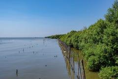 Seeküste des Mangroven-Waldes lizenzfreies stockbild