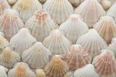Seekammuscheln deckten Beige mit Ziegeln Stockfotos