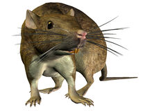Seeking rat. 3D rendering of a search of rat Stock Image