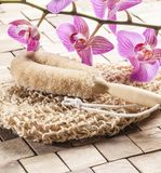 Seeking for vitality and energy for spa treatment Royalty Free Stock Photo