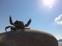 Seekrabbe, die Greifer zur Sonne anhebt Lizenzfreie Stockfotos