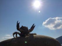 Seekrabbe, die Greifer zur Sonne anhebt Stockfotos