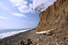 Seeküste mit Fluss-Steinen, Steinen und trockenem Baum Stockfotos