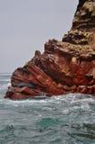 Seelöwe auf Felsen in Peru Stockfotos