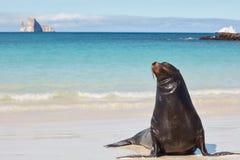 Seelöwe auf weißem Sand-Strand mit Kicker-Felsen und Boot in Galapagos lizenzfreie stockfotografie