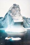 Seelöwe, der auf Eis schläft Stockbild