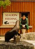 Seelöwe-Fütterung Stockfotos