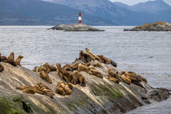Seelöweinsel und Leuchtturm - Spürhund-Kanal, Ushuaia, Argentinien stockfoto