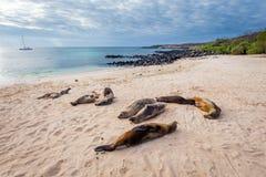 Seelöwen auf Mann setzen San Cristobal, Galapagos-Inseln auf den Strand lizenzfreies stockfoto