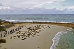 Seelöwen, die auf dem Strand sich sonnen Stockbilder