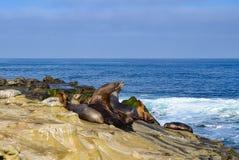 Seelöwen, die auf den Felsen sich sonnen Stockfotografie