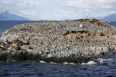Seelöwen und Magellanic-Kormorankolonie auf Isla de Los Pajaros oder Vogel-Insel im Spürhund-Kanal Lizenzfreies Stockbild