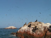 Seelöwen und -vögel stockfotografie