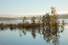 Seelandschaft mit den Büschen umgeben durch Wasser Stockfotografie
