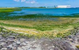 Seelandschaft mit Felsen und Meerespflanze Stockfotografie