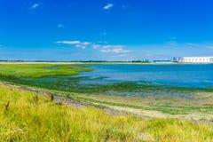 Seelandschaft mit Gras und Meerespflanze Lizenzfreies Stockfoto