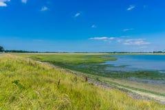 Seelandschaft mit Meerespflanze Stockfoto