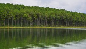 Seelandschaft am Sommer in Dalat, Vietnam Lizenzfreies Stockfoto