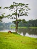 Seelandschaft am Sommer in Dalat, Vietnam Stockbilder