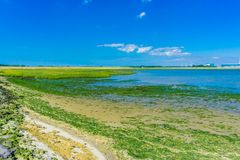 Seelandschaftsblauer Himmel und -meerespflanze Lizenzfreie Stockfotos