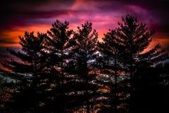 Seele des alten Waldes Stockfotos