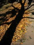 Seele des Baums Lizenzfreies Stockfoto