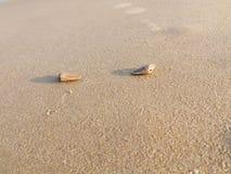 Seelen-Auster stockfoto