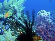 Seelilie und -koralle Lizenzfreie Stockbilder