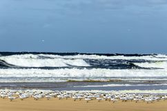 Seemöwenwartefliege am Strand lizenzfreies stockbild