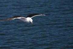 Seemöwe über dem Meer Lizenzfreies Stockbild