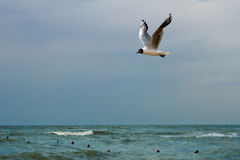 Seemöwe über dem Meer Stockbild