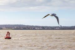 Seemöwe über dem Mersey stockbild