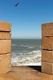 Seemöwe über Essaouira Fort Lizenzfreie Stockbilder