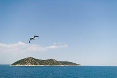 Seemöwe über Insel Stockfotos