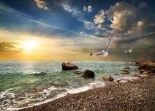 Seemöwe über Meer Stockbilder