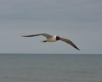 Seemöwe über Ozean Lizenzfreie Stockfotos