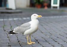 Seemöwe Lizenzfreies Stockbild