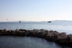 Seemöwe auf adriatischer Seeküste Stockfoto