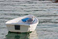 Seemöwe auf Boot Stockfotos