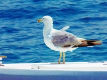Seemöwe auf Boot Lizenzfreie Stockfotos