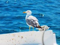 Seemöwe auf Boot Lizenzfreie Stockfotografie