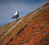 Seemöwe auf Dach lizenzfreies stockfoto