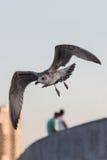 Seemöwe auf dem blauen Himmel über der Stadt und den Leuten Lizenzfreie Stockfotos