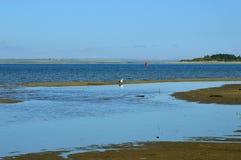 Seemöwe auf dem blauen Hintergrund des Flusses säubert die Federn Lizenzfreie Stockbilder