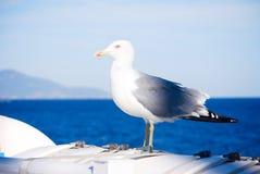 Seemöwe auf dem Boot Stockfoto