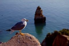 Seemöwe auf dem Felsen stockbild