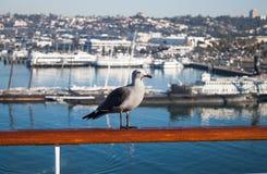 Seemöwe auf dem Geländer des Schiffs Stockbilder