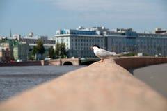Seemöwe auf dem Geländer des Stadtdammes stockfotografie