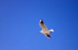 Seemöwe auf dem Himmelhintergrund Lizenzfreies Stockfoto